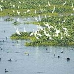 Indian Environment Ministry Drafts Wetlands (Conservation and Management) Rules, 2010