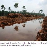 Major Breakthrough in Protection for Indonesia's Remaining Rainforests