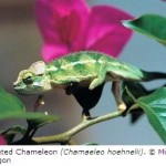 One in Five Reptile Species Faces Extinction