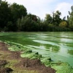Extreme Algae Blooms: The New Normal?