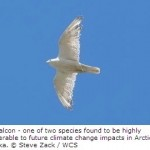 Breeding Birds Vulnerable to Climate Change in Arctic Alaska