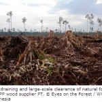 APP's New Deforestation Policy neither Protects nor Commits to Restore Sumatra's Forests