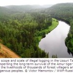 Russian Forests and Tigers Left Floored by Illegal Logging