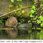 Sixty Per Cent of UK Species in Decline