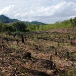 80% of Malaysian Borneo Degraded by Logging