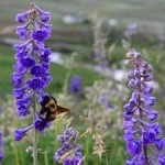 Plant-Pollinator Relationships Compromised When Bee Species Decline