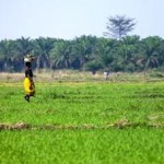 How Africa Can Transform Land Tenure, Revolutionize Agriculture and End Poverty
