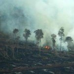 Palm Oil Leading Cause of Indonesia Forest Destruction