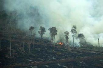 Forest Fires and Deforestation in Indonesia