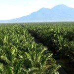 Palm Oil Giant Wilmar Commits to End Forest Destruction