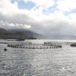 Coastal Ocean Aquaculture can be Environmentally Sustainable