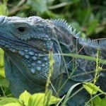 UK Government Must do more to Protect Biodiversity in Overseas Territories