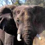Decisive Action Agreed on Illegal Wildlife Trade