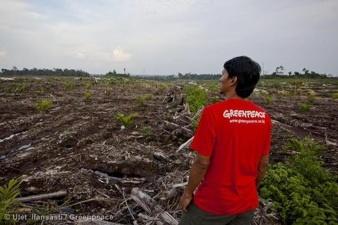 Deforestation in Central Kalimantan, Indonesia