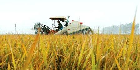 Agriculture. © IFPRI