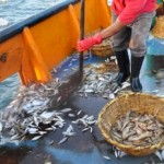 New Oceana Report Exposes Nine of the Dirtiest U.S. Fisheries