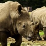 World Wildlife Day 2014 Spotlights Far-Reaching Impacts of Illegal Wildlife Trade