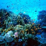 Researchers Show What is Needed to Make Marine Parks Effective