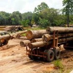 Logging Concessions Enabling Illegal Logging in Peruvian Amazon