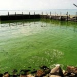 New Pollution Targets Needed to Protect Lake Erie from Dead Zone