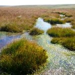 Restoring Peat Bogs Prevents Flooding, Improves Water Quality