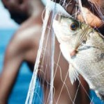 Report Highlights Growing Role of Fish in Feeding the World