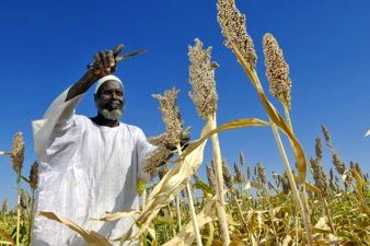 Sorghum Farming in Sudan