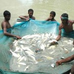 Farmed Fish Production Must More than Double by 2050