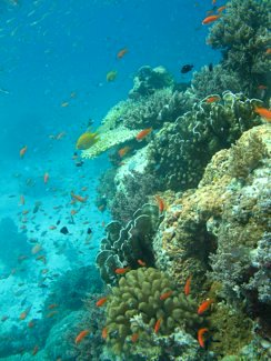 Coral Reefs in East Similan Sea
