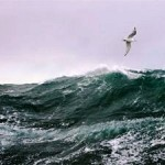 High Seas Store 500 Million Tonnes of Atmospheric Carbon Every Year