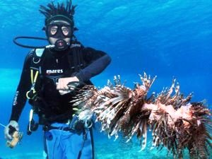 Invasive Species: Lionfish