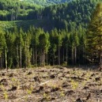Deforestation Remedies Can Have Unintended Consequences
