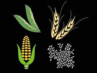 Food Crops. Illustration: Christine Daniloff / MIT