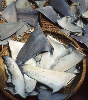 Shark Fin Trade. © WildAid