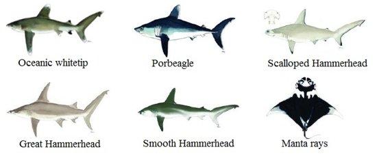 Sharks. © CITES
