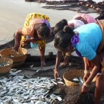 Shift in Arabian Sea Plankton May Threaten Fisheries