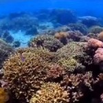 Marine Protected Areas Not Enough to Help Overfished Reefs Recover