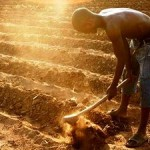 Agricultural Revolution in Africa could Increase Global Carbon Emissions