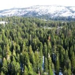 Sierra Nevada Freshwater Runoff could Drop 26% by 2100