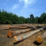 Over 100 Million Hectares of Intact Forest Area Degraded Since 2000