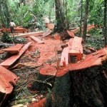 EU Countries Failing to Halt Illegal Timber Trade