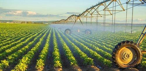 Potato Crops. © Yale
