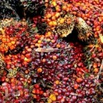 Cargill Publishes First Palm Oil Progress Report