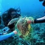Pollution in World's Oceans Threatens Millions of Marine Animals