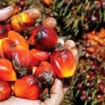 Unilever's European Food Business Reaches 100% Traceable, Certified Sustainable Palm Oil