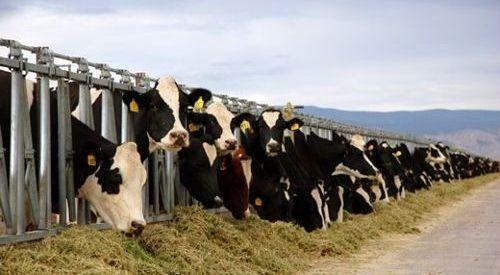 Livestock. © Chatham House / iStockphoto
