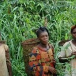 Rights of Forest Peoples Being Ignored in Climate Change Negotiations